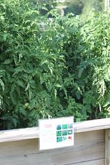 IMG_7902 (giddyup2002) Tags: grantsviewcommunitygarden grantsviewgarden communitygarden garden stlouis