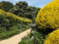 Madeira Walk II, Ascott, near Wing, Buckinghamshire, 24 June 2018 (AndrewDixon2812) Tags: ascott wing buckinghamshire nationaltrust rothschild garden madeira walk venus fountain topiary hedge herbaceous border
