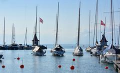 Port de Morges (Diegojack) Tags: morges vaud suisse d7200 paysages léman lac bateaux voiliers douceur groupenuagesetciel