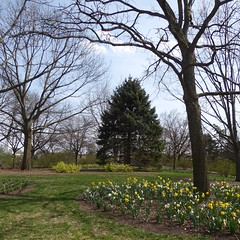 Lombard, IL, Lilacia Park, Garden Scene (Mary Warren 13.6+ Million Views) Tags: lombardil lilaciapark park garden nature flora plants pink blooms blossoms flowers tulips white yellow tree evergreen