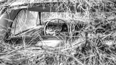What You Want, But Not What You Need (Wayne Stadler Photography) Tags: georgia preserved retro abandoned classic rustography automotive overgrown vehiclesrust rusty junkyard vintage oldcarcity rustographer derelict white