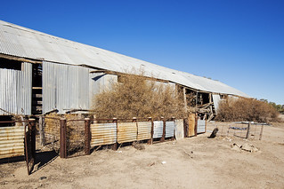 Another View of the Shearing Shed