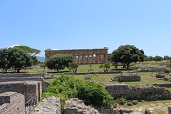 IMG_4948 Paestum (drayy) Tags: paestum rome roman ancient magnagraecia temple town italy europe campania greek