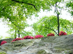 Flowers on the Hill (Stanley Zimny (Thank You for 31 Million views)) Tags: bronx botanical garden red color rock flowers