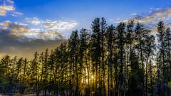 Sunset in the Whiteshell (digismith44) Tags: landscape sunset pine trees eastern manitoba whiteshell provincial park