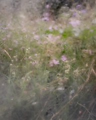 Eroded (jellyfire) Tags: lostmeadow flower landscape landscapephotography macro meadow sonnartfe55mmf18za sony sonya7r bokeh campion daisy flora grass green lawn mallow nature oxeyedaisies summer wildflower