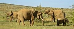 Namibie 2018 - Damaraland (philippebeenne) Tags: afrique africa namibie damaraland animauxsauvages animals paysages nature landscape
