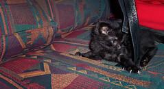 Pepe story (Pepenera) Tags: cat cats chat gatto gato gatti felino