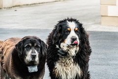 We love Ireland (*Capture the Moment*) Tags: 2018 clouds dogs holiday ireland irland june sonya6300 sonyilce6300 tongue tripmhunde wetter wolken zunge cloudy wolkig