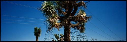 Mohave Desert, CA. USA.