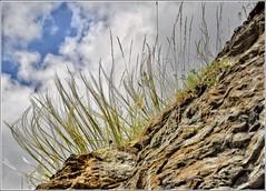 Le rocher chevelu (Charlottess) Tags: herbe rocher nikon5300 juillet alpesdehauteprovence