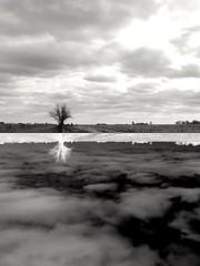 Parallel universe. (guido.mignardi) Tags: surrealism blackandwhite negativo tree naturaleza natural