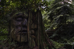 The Masked Watcher (courtney_meier) Tags: britishcolumbia canada firstnations gaultheriashallon salal thujaplicata westernredcedar art artwork carving cedar forest stump trees