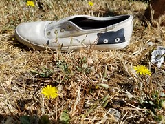 Peek-a-boo shoe (quinn.anya) Tags: shoe dandelion flower eyes animal forgotten berkeley