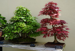 bonsai baum garten, the world's best photos of bonsai and garten - flickr hive mind, Design ideen