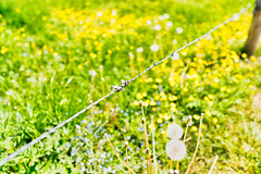 Fenced (**capture the essential**) Tags: 2018 mai mangfall sigma11416mmdcdn sonya6300 sonyilce6300 happyfencedfriday fencedfriday hff
