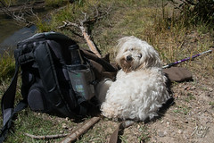 Hiking Buddy (KGHofSF) Tags: colorado copilot kgh kghofsf trail usa canine dog hike ismy photo photograph photography