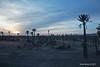 Palmeiral em Marraquexe (Sofia Barão) Tags: marrocos morroco marrakech