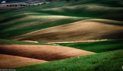 Onde di terra (SDB79) Tags: campagna ururi molise terra grano paesaggio