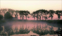 In the morning (Jenne Barneveld) Tags: morning morningwalk nature naturephotography mist misty mistymorning mistylandscape trees tree reflection water waterreflections