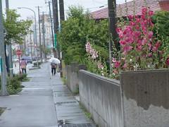 Walking in the rain (しまむー) Tags: sony cybershot dscf828 f828 carl zeiss variosonnar t 751mm 28200mm f228 walk mutsu rain rainy