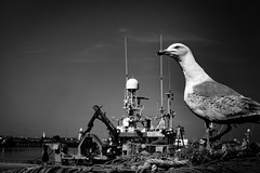Habitat (Kieron Ellis) Tags: bird seagull sea seaside port fishingboat nets coast blackandwhite blackwhite monochrome radar crane