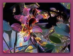 There are two ways of spreading light: to be the candle or the mirror that reflects it. (Edith Wharton) (boeckli) Tags: textures texturen texture textur topaz ddg deepdreamgenerator flowers flower flora fleur plants plant pflanzen outdoor photoborder rainbow regenbogen farbig farbenfroh colourful colorful colours bunt 04809