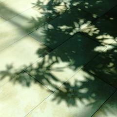 taking pleasure in house plants (vertblu) Tags: shadow shadows shades shadesofgreen sharpcontrast shadowshow shadowplay houseplants floor stonefloor stoneground ground naturalstone bsquare 500x500 vertblu diagonal lines rectangles abstractfeel almostabstract