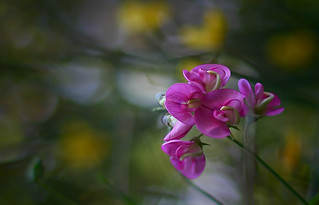 A wonderful country flower