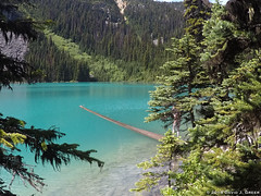 Famous Joffre Lake Log (David J. Greer) Tags: joffre lake provincial park british columbia hike hiking lakes mountains trail log turquoise trees branches