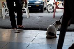 DSCF9568 (lukmanism) Tags: fujifilm helios442 lensturbo2 kualaklawang negerisembilan malaysia streetphotoghraphy silhouette vintagelens pasartani market sunrise muziumadat