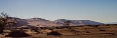 golden desert (Tatjana_Schmid) Tags: namibia sossusvlei deadvlei wüste desert sand sanddunes dünen africa afrika landschaft landscape reise holiday urlaub travel