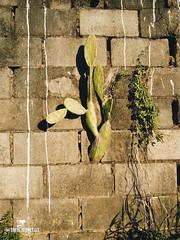 Nature Resist (young.immortals) Tags: limeira sãopaulo brasil nature city cidade rio river old natureza ceu sky saopaulobrasil street foto film photoshop photograph photo lightroom life lifestytle l