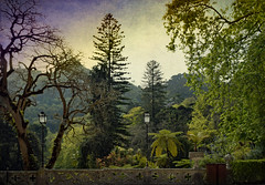 Enchanted Woodland (Jocelyn777) Tags: gardens woodland forest trees foliage parks landscapes textured monuments historicsites towns villages historictowns green quintadaregeleira sintra portugal travel