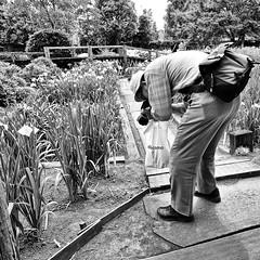 saitama, japan (michaelalvis) Tags: tsukano asia bw blackandwhite candid city citylife fujifilm japan japanese japon flower monochrome nihon nippon nature peoplestreet portrait people peoplestreets photography streetphotography streetlife street travel tokyo urban saitama x70