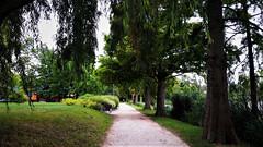 Sétaút a zöld ciprusok alatt (Szombathely) (milankalman) Tags: green