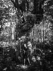 Wild child (Aran Kos) Tags: wild child italy monocromatico nature wood