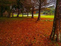 Folhas vermelhas no Parque São Lourenço (Eduardo PA) Tags: curitiba paraná nokia pureview microsoft windows phone 950xl lumia wp folhas vermelhas no parque são lourenço