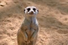 DSC_5669 (vovadvd) Tags: zoobarcelona zoo barcelona spain ispana nikon d750 tamron 2470 g2 зоопарк барселона испания