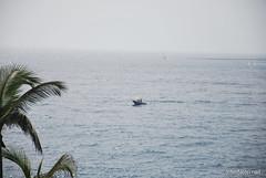 Playa de las Américas, Тенеріфе, Канарські острови  InterNetri  816