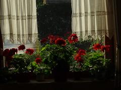 Neuer Morgen 001 (bratispixl) Tags: fotosafari oberbayern germany bratispixl tele lichtwechsel schärfentiefe fokussierung bergwelt spot outdoor indoor architektur landschaft grat hügel wasser sonnenfotografie see flus tiere nature nigth day spuren blumen wolken video