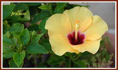 Fiori (fr@nco ... 'ntraficatu friscu! (=indaffarato)) Tags: fiore fiori macro