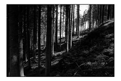 The Woods Edge (Chris-D-Bailey) Tags: elements