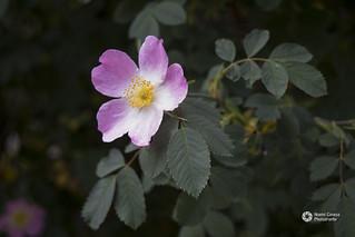 Flores en el pririneo