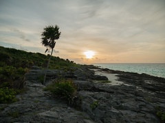 Xcaret Sunrise (KalleKrabowsky) Tags: mexico sunrise palmtree coast ocean xcaret