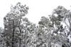 Brindabella Snow 0005 (BrianRope) Tags: brindabellas brindabellaroad cotterriver namadginationalpark snow brindabella nsw australia