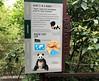 Panda sign at SNZ (heights.18145) Tags: visitthezoo national zoo washingtondc animals pandas fun cute bamboo beibei tiantian meixiang