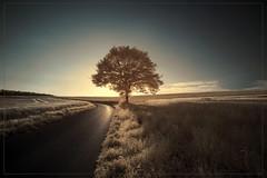 2018 06 25 Bäume im Taunus  IR - 02 (Mister-Mastro) Tags: 720nm fullspectrum infrared infrarot ir tee baum arbre