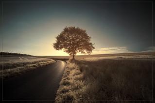 2018 06 25 Bäume im Taunus  IR - 02