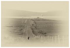 The Lighthouse Keeper (mickreynolds) Tags: 2018 beacon comayo ireland lighthouse wildatlanticway broadhaven belmullet sheep dog vignette boreen erris